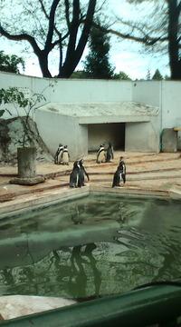空とぶペンギン