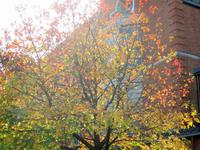 秋の日のランチ (同志社大学・寒梅館)