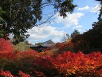 紅色の大海 (東福寺)
