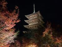 紅葉の中の五重塔 (東寺)