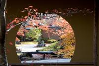 みちのくの紅葉 (仙台・円通院)