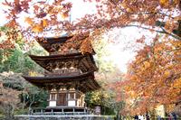 晩秋の三重塔 (湖東三山・西明寺)