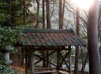 朝日の中の散りモミジ (山科・毘沙門堂)