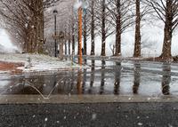 雪を溶かす (マキノ・メタセコイア並木)