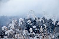 雪晴れの日 (マキノ・マキノ高原)