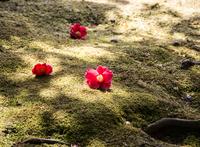 苔に咲く花 (城南宮)