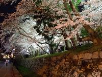春を満喫する桜たち (浜大津・三井寺)