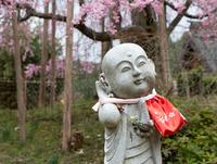 春の声が聞こえるよ ♪  (右京区京北・金花山 宝泉寺)