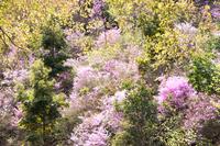お花のパレット (高山寺)