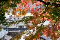 秋のおとずれ (木之本・與志漏神社)