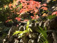 午後の陽光を浴びて (木之本・鶏足寺)
