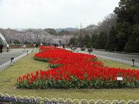 京都府立植物園へ