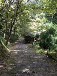 京都の北西、高雄・槇尾・栂尾の三尾めぐりに行ってきました♪