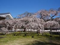 2018年3月30日 京都さんぽのご案内