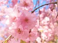 4月16日(日) ゆるり茶会のお知らせ