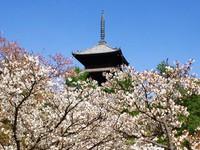 4月17日(月)京都さんぽのお知らせ