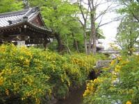 4月24日(月)京都さんぽのお知らせ