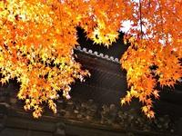 11月25日 京都さんぽのお知らせ