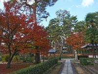 12月4日 京都さんぽ 暮秋を彩る下鴨神社の名残の紅葉レポート