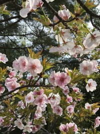 4/15京阪ウォークのご案内♪