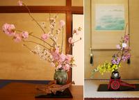 2017年4月16日 《桜花ゆるり茶会》 桜の花を囲んで春爛漫の一服