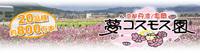 京都丹波・亀岡『夢コスモス園』20品種800万本のコスモスが風そよぐ