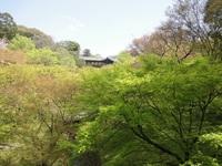 4/9 桜ミステリーさんぽ
