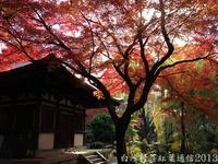 白沙村荘紅葉通信2013 Vol.23