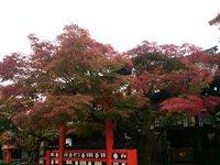 紅葉…車折神社さん。