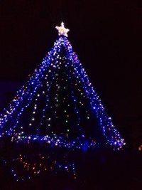 桂のクリスマスツリー