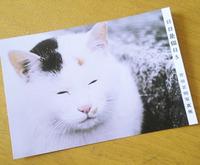 【日日是猫日 5】吉田正明写真展 開催中