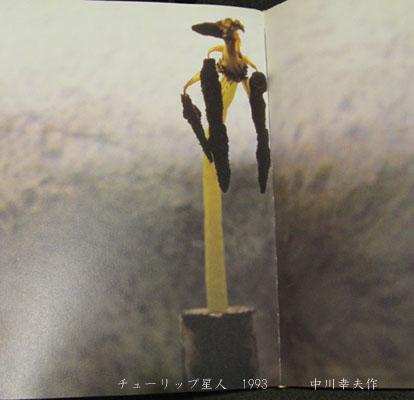 中川幸夫の画像 p1_30