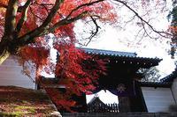 まんじゅいん、吉田神社