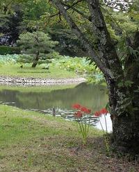京都 嵯峨野散策