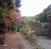 常照皇寺の翌日 小塩東谷の紅葉を愛でに