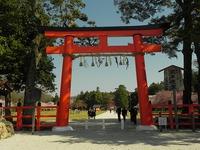 花便り 上賀茂神社から、下鴨疎水へ!