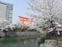花便り 円山公園から蹴上南禅寺へ♪