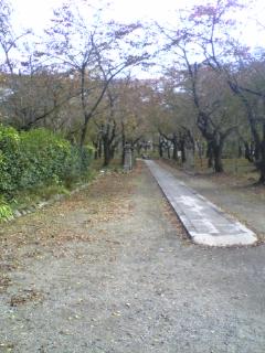 平野神社の紅葉(1)