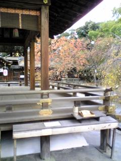 平野神社の紅葉(2)