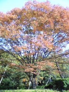 鴨川の秋(2)