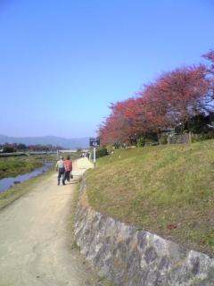 鴨川の秋(3)