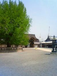 西本願寺。 2010/05/16 18:29:17
