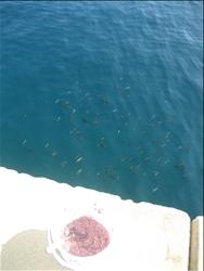 【海士町】小さな魚見えますか?