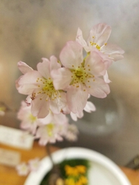 ショップも春色になりました 松山三越店