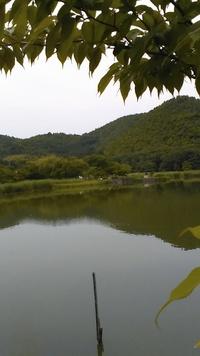 今日の京都は、曇天~広沢池