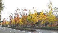 秋色の川端通り