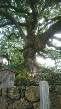 メルマガ412号「あるく京都18【その1】東山周辺をあるく」