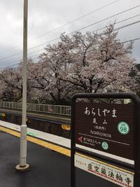 最新の京都桜情報5