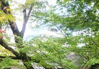 メルマガ414号「新・あるく京都19【その1】永観堂周辺をあるく」