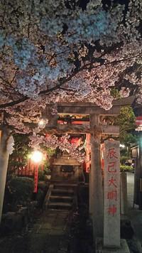 京都の最新桜情報8